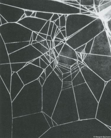Spinnennetz; veränderte Struktur aufgrund der Einnahme von Koffeein