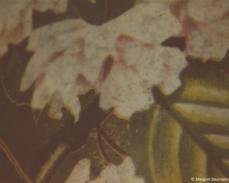 Makro/Polaroid 28
